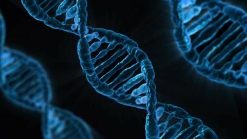 Edição de genoma | Doença renal hereditária poderá ter cura
