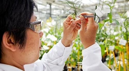PBi | Melhoradores de plantas precisam-se