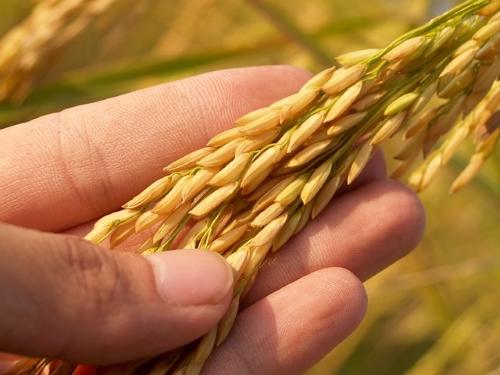 Debate | O papel da ciência na produção e segurança alimentar