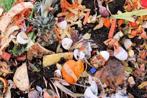 Sustentabilidade | Seis maneiras de alimentar o mundo