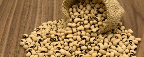 OGM | Nigéria é o primeiro país a aprovar o cultivo de feijão-frade resistente à broca