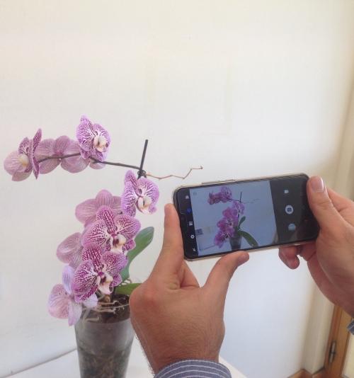 Desafio |Concurso de fotografia para celebrar Dia do Fascínio das Plantas