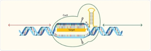Edição de genoma | Investigadores dizem que Europa tem de mudar de atitude