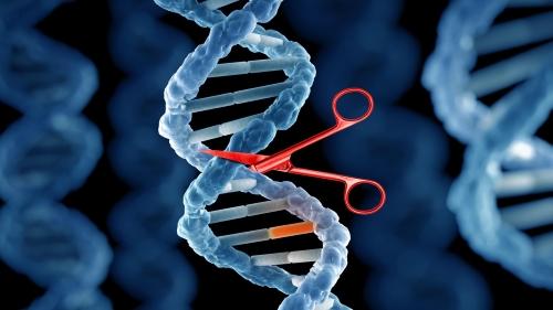 Edição do genoma | Lista de produtos e projetos de investigação