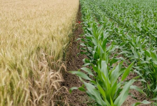 Edição de genoma   15 ministros da Agricultura europeus defendem alteração legislativa