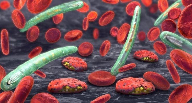 Descoberta | Fungo geneticamente modificado mata 99% dos mosquitos da malária
