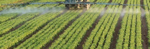 Alimentos| 96% sem resíduos de pesticidas ou com vestígios dentro dos níveis permitidos