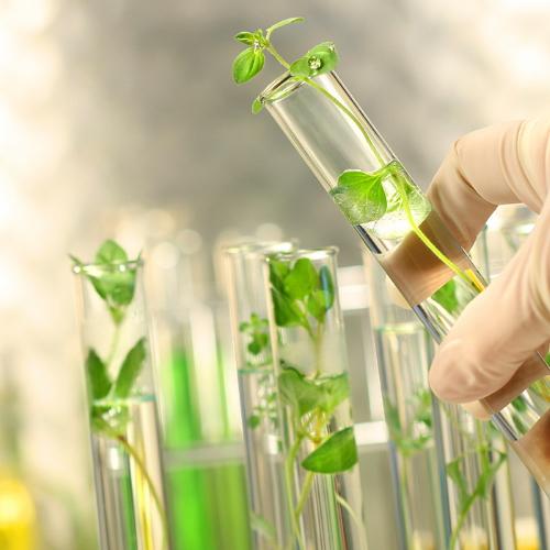 OGM   Não, não é verdade