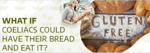 Edição de genomas|E se os celíacos pudessem comer pão?