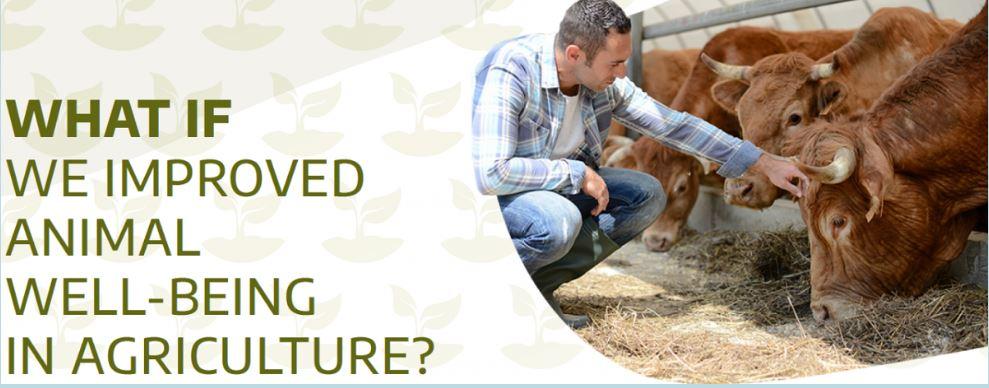 Edição do genoma  E se melhorássemos o bem-estar animal na pecuária?