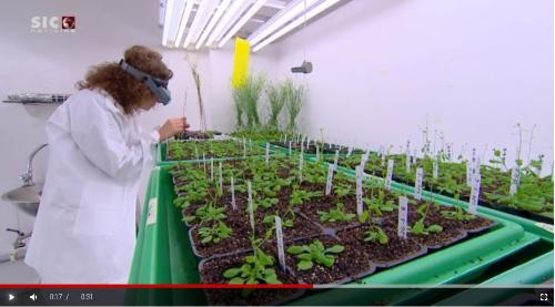 Alimentação | Edição genética de plantas entre as soluções apontadas pelos cientistas