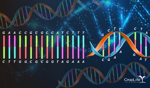 Biotecnologia | Edição de genoma será um marco na agricultura moderna