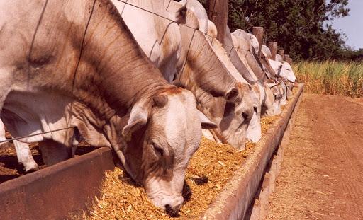 Pecuária | Que impacto o aumento do preço das matérias primas vai ter no custo da alimentação?
