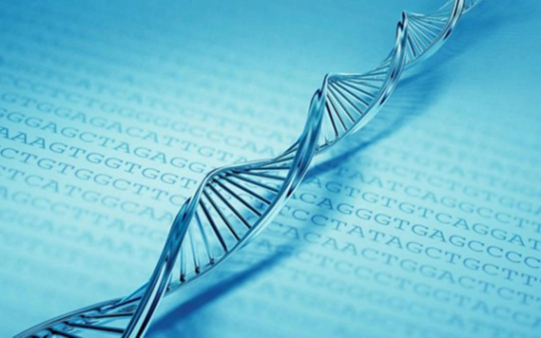 Webinar | Investigadores discutem futuro da genómica