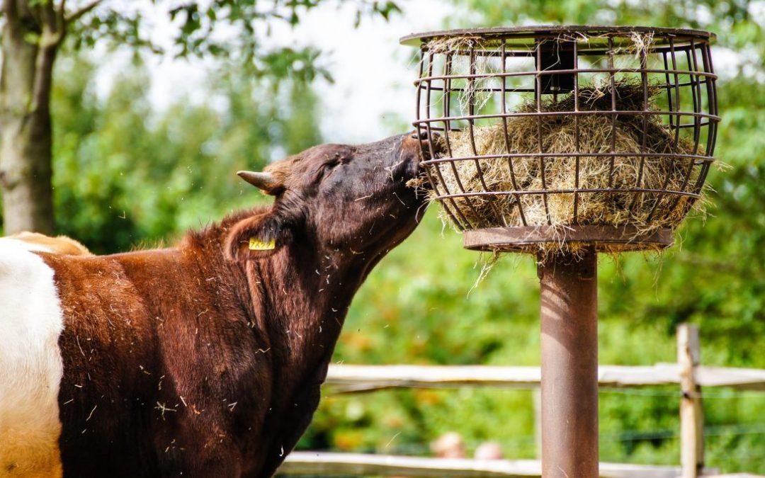 Conferência | IACA e USSEC debatem o futuro da alimentação animal