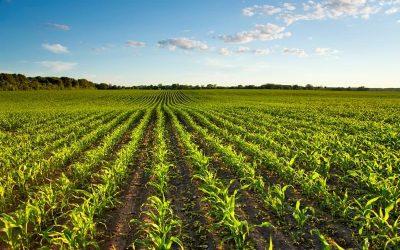 CiB critica estratégias europeias e defende que as medidas colocam em risco a produção e a competitividade agrícola da UE