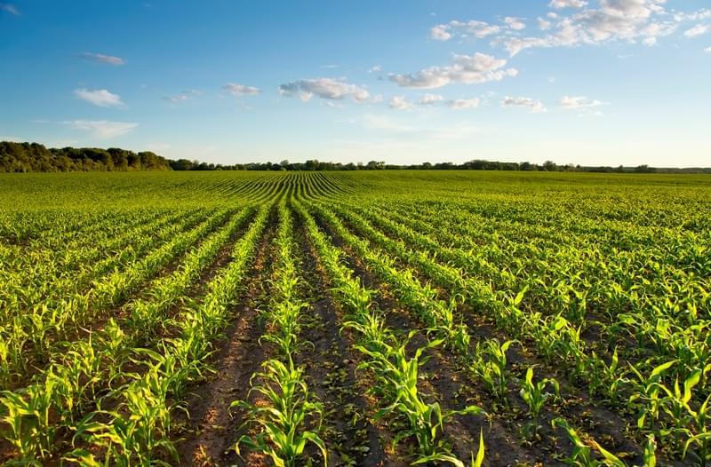 Relatório | Grupo Europeu de Ética aconselha UE a adotar Edição do Genoma na agricultura