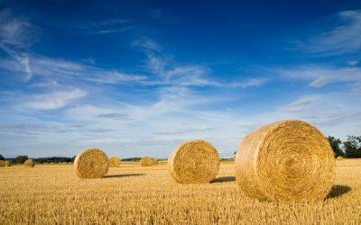 'Do Prado ao Prato' e 'Biodiversidade 2030': CiB questiona estratégias