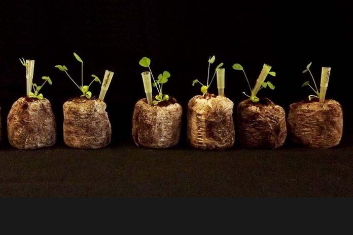 NTG | Inglaterra poderá em breve autorizar a edição de genes em plantas e animais