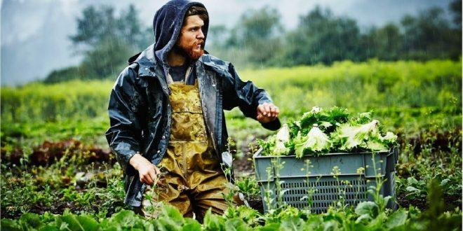 """CiB: Estratégias Do Prado ao Prato e Biodiversidade 2030 """"colocam em risco a produção e a competitividade agrícola da UE"""""""