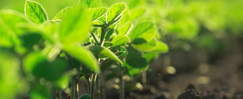 Evento | Novas Técnicas Genómicas em debate no Fórum para o Futuro da Agricultura