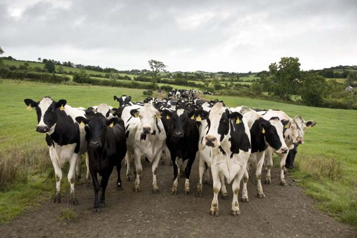 Declarações do Comissário Europeu do Ambiente repudiadas por produtores pecuários