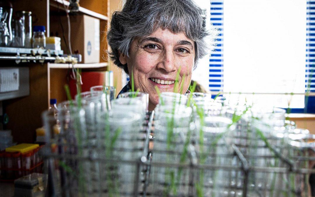 """Investigadores portugueses tentam """"criar"""" arroz com vitaminas do complexo B"""
