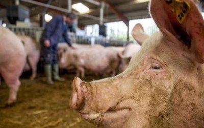 Produtores pecuários da EU desmentem comissário europeu