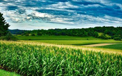 OPINIÃO: Estratégias da UE colocam em risco produção e competitividade agrícola