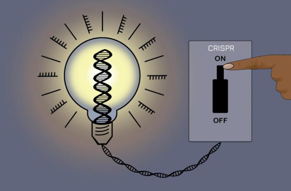 CRISPRoff | Investigadores melhoram tecnologia de edição de genes com interruptor