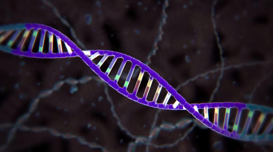 Comunicado | Reação do CiB ao estudo da CE sobre edição genética