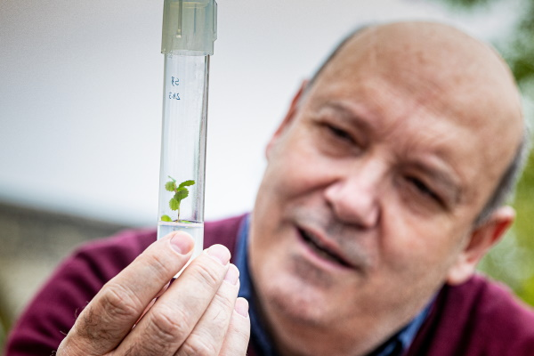 """""""Micropropagação é a ferramenta biotecnológica que permite obter plantas geneticamente iguais"""""""