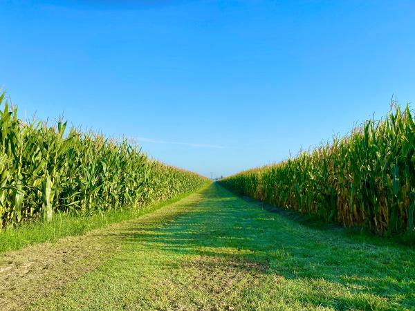 Agricultura | Edição genética é compatível com produção biológica