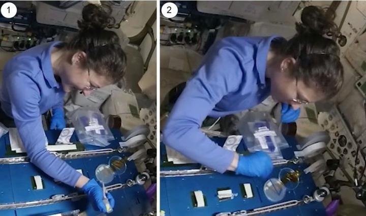 Descoberta   Danos no DNA de astronautas podem ser reparados com CRISPR