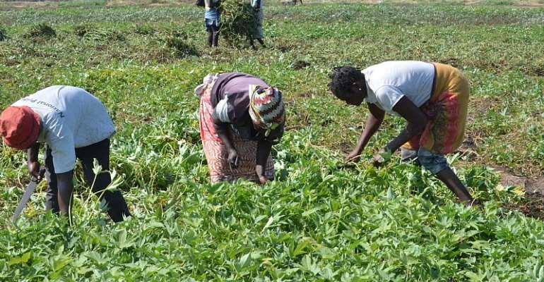 OGM   Agrobiotecnologia pode ajudar a reduzir a fome no mundo