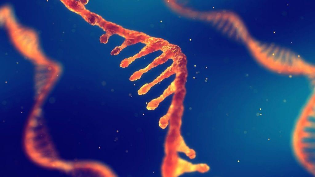 RNA | Avanços na tecnologia duplica produção de plantas de arroz e batata