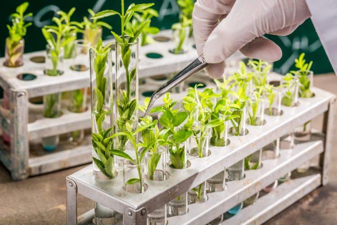 Estudo | Melhoramento de plantas pode compensar perdas na produção resultantes das estratégias 'Do Prado ao Prato' e 'Biodiversidade'