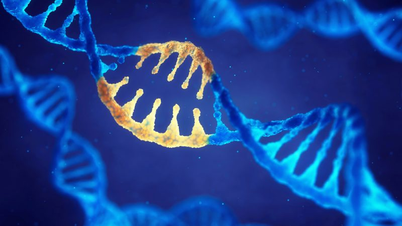 NGT | Comissão Europeia favorável à biotecnologia na agricultura