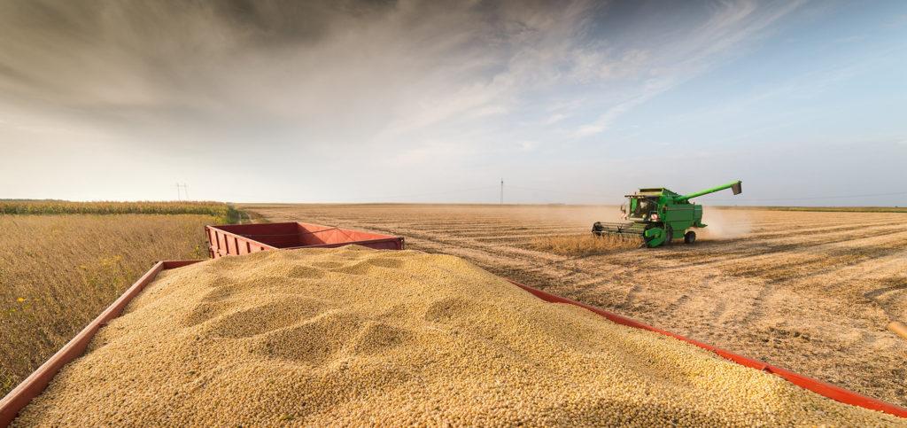 Consumo | Preocupação dos consumidores com OGM diminui quando têm informações com base científica